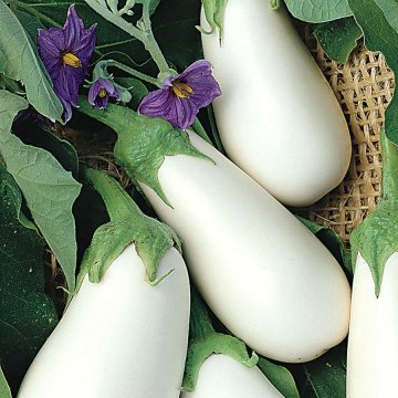 White Star Hybrid Eggplant Seeds
