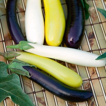 Fingerling Blend Eggplant Seeds
