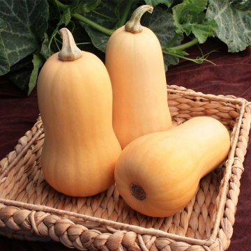 Lil' Dipper Hybrid Winter Squash Seeds