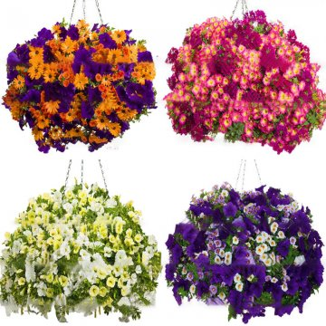 100pcs/bag petunia seeds petunia plants hanging bonsai mini petunia beautiful flower seeds