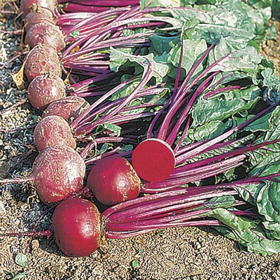 Moulin Rouge Hybrid Beet Seeds