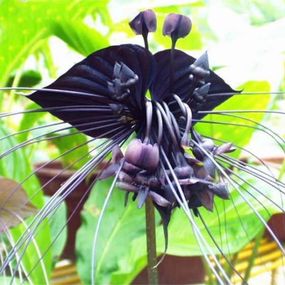 100pcs/bag black tiger shall orchid seeds multiple varieties orchid flowers seeds for garden