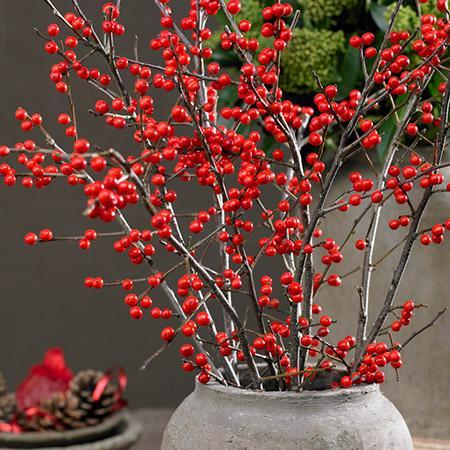 Winter Red Winterberry Holly