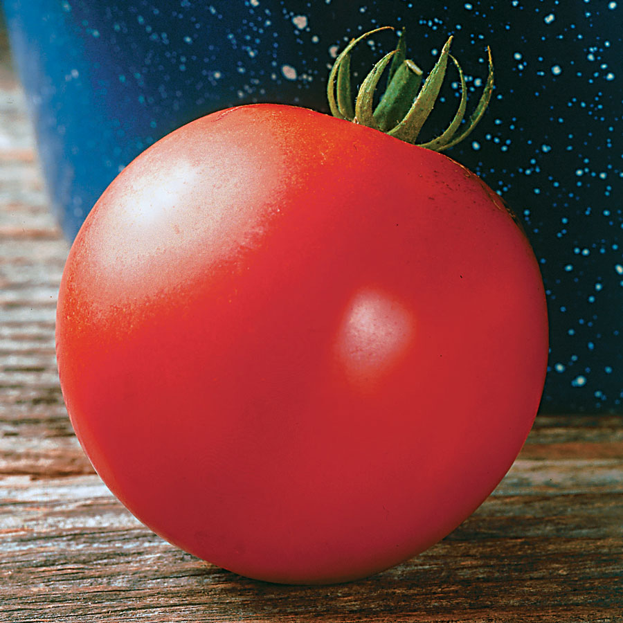 Mountain Fresh Plus Hybrid Tomato Seeds