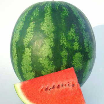 Shiny Boy Hybrid Watermelon Seeds [WS-16555]
