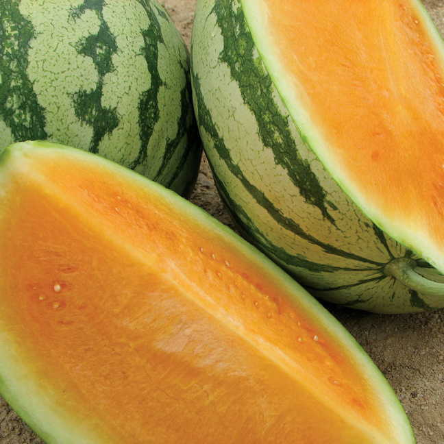 Orange Crisp Hybrid Watermelon Seeds (P) Pkt of 10 seeds