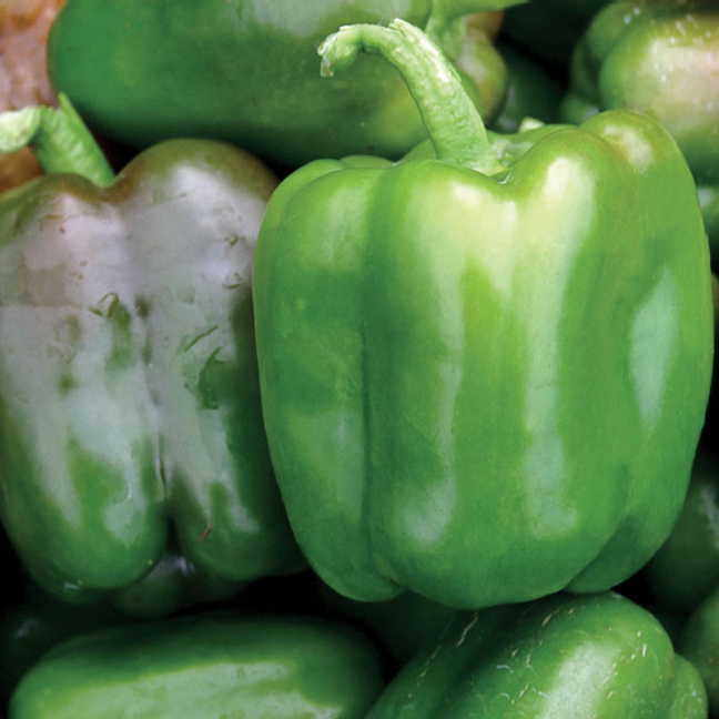 Candy Bell Hybrid Pepper Seeds