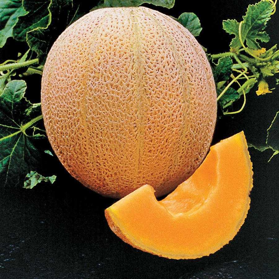 Hale's Best Organic Melon Seeds [WS-16201]