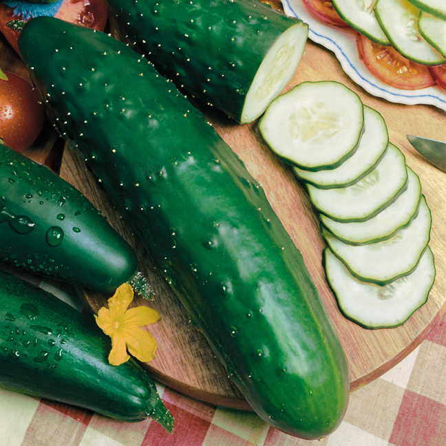 Park's Select Slicer Hybrid Cucumber Seeds