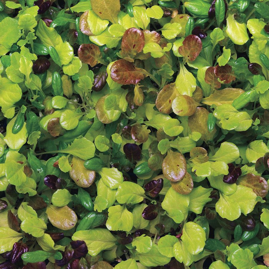 Simply Salad City Garden Mix Seeds
