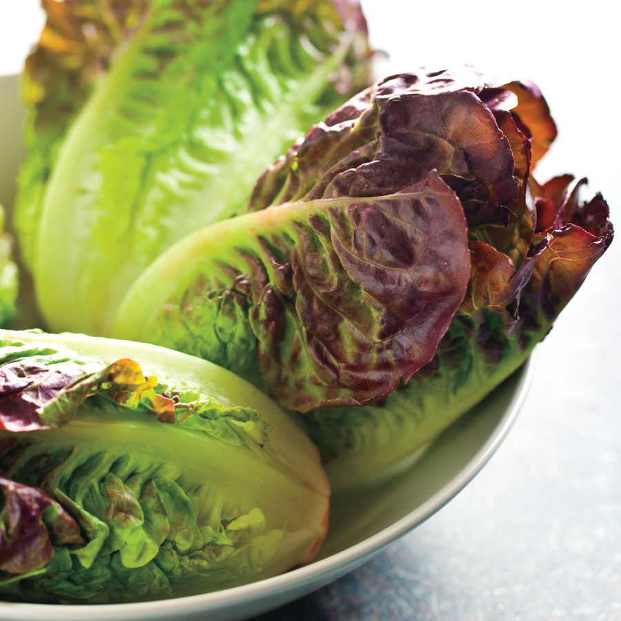 Mini Romaine Blend Lettuce Seeds [WS-16199]