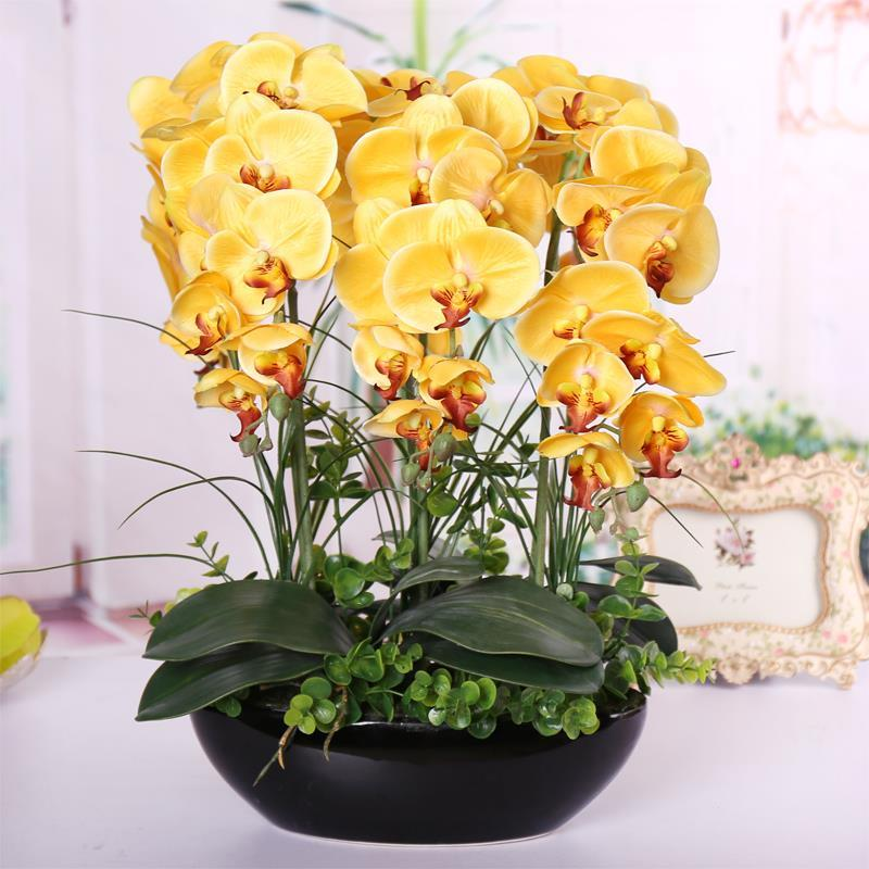100pcs phalaenopsis seeds living room decoration flowers potted plant seed home garden