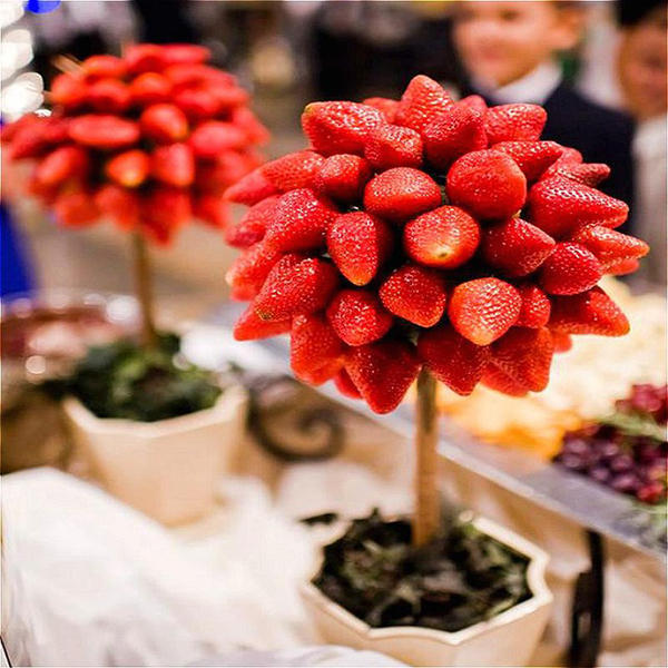100 pcs/pack strawberry tree seeds rare fruit strawberry bonsai seed garden diy planting