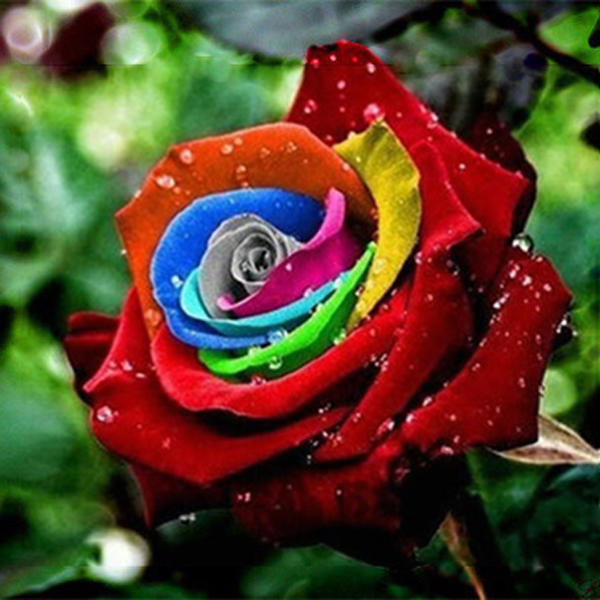 200pcs rainbow rose seeds rare colorful flower potted plant garden bonsai